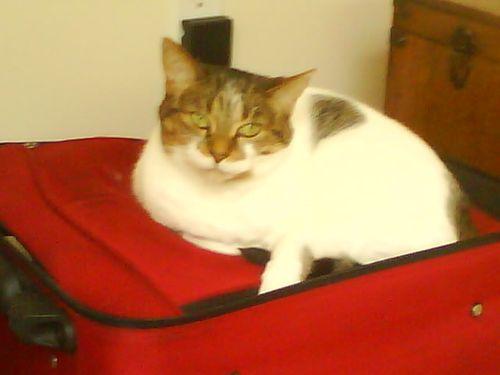 Tikki fienes cat
